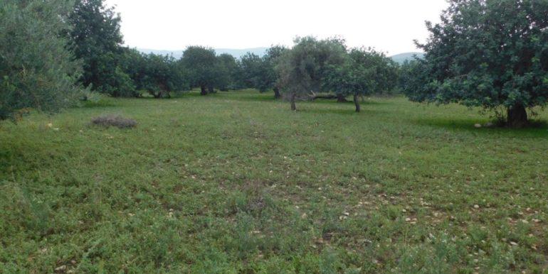 terreno_agricolo-in-vendita-a-chiaramonte_gulfi (22)