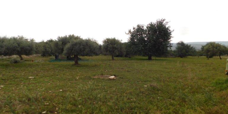 terreno_agricolo-in-vendita-a-chiaramonte_gulfi (6)