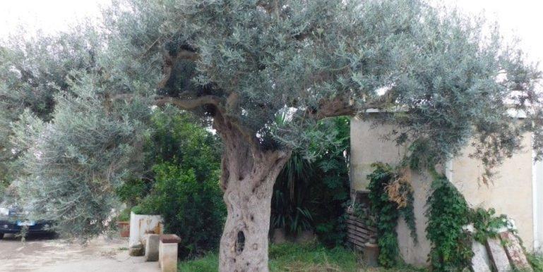 terreno_agricolo-in-vendita-a-chiaramonte_gulfi (7)